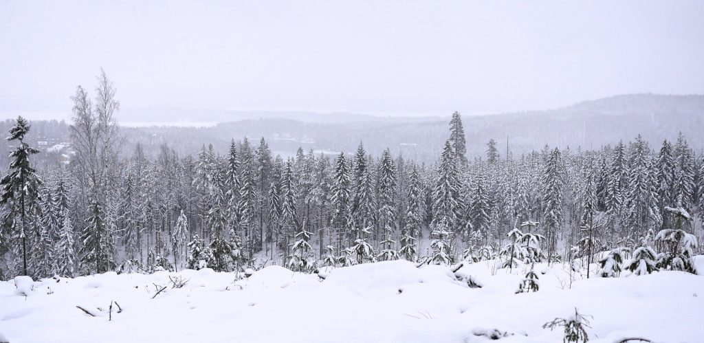 Talvinen metsämaisema