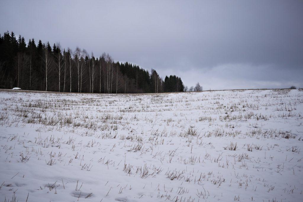 Talvinen peltomaisema