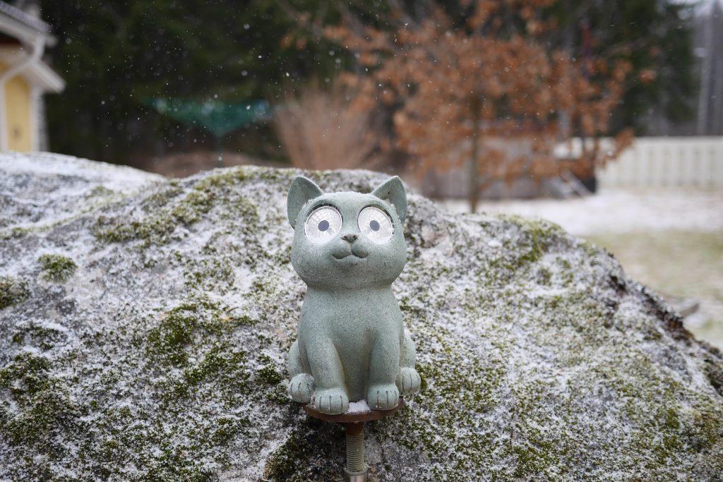 Kissapatsas kivellä lumisateessa