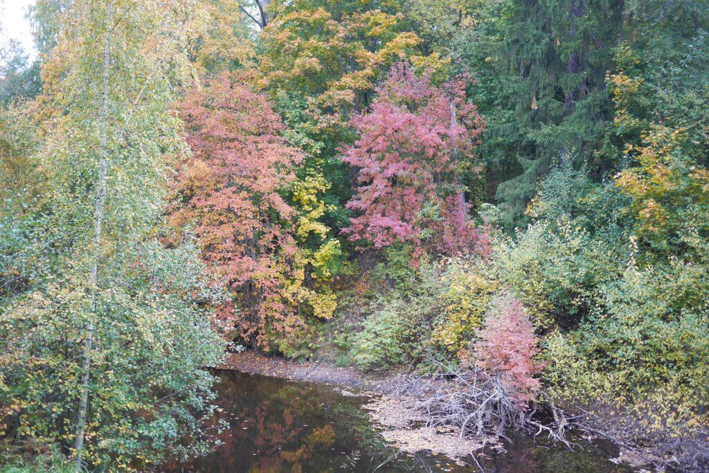 Värikästä puustoa joen varrella