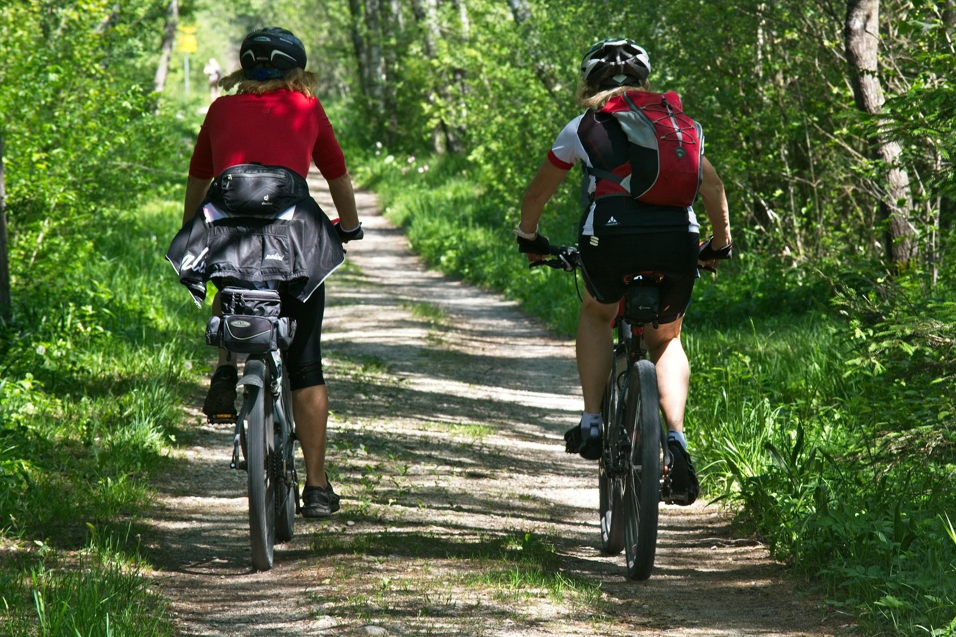 kaksi pyöräilijää kesäisellä metsätiellä